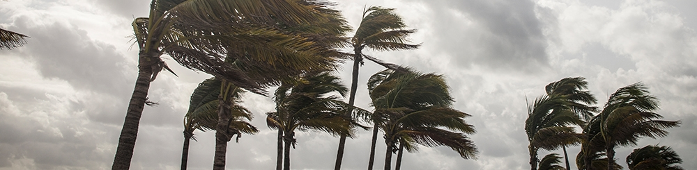 Florida Insurance